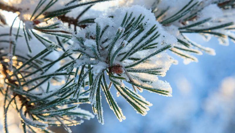 L'hiver, redoublons de bienveillance !